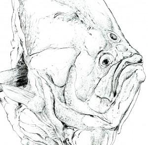 fragment, Günter Grass, Mestwina z Turbotem, 1974 / dar Stowarzyszenia Güntera Grassa w Gdańsku dla Muzeum Narodowego w Gdańsku
