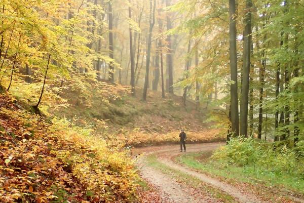 Wybierz się z nami w przepiękne lasy Nadleśnictwa Strzebielino