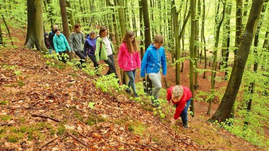 Poznaj ciekawostki przyrodnicze i historyczne Trójmiejskiego Parku Krajobrazowego. Dołącz do rodzinnych wędrówek w ramach programu Aktywuj się w Gdańsku