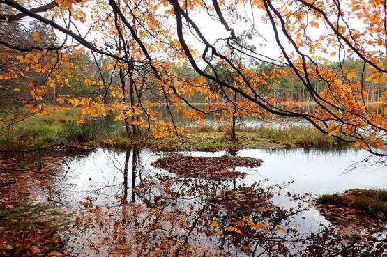 Wędrówka wśród jezior lobeliowych, to ciekawa propozycja na aktywny wypoczynek nie tylko latem. Wybierz się z nami, poznaj ciekawe miejsca i pozytywnie zakręcone towarzystwo