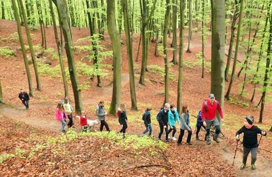 Chcesz poznać ciekawostki przyrodnicze okolicznych lasów? Dołącz do naszych pieszych wędrówek dedykowanych rodzinom z dziećmi oraz osobom w podeszłym wieku !