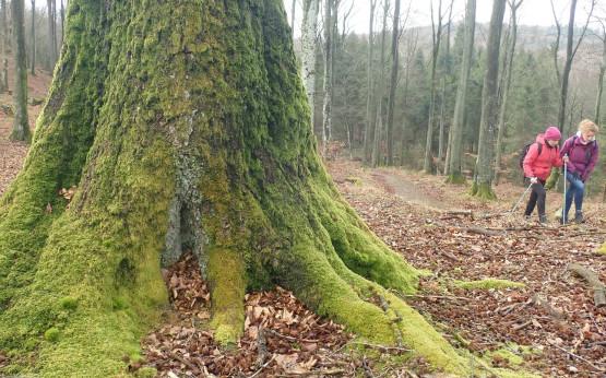 Podczas czwartkowych, popołudniowych wędrówek po pracy odwiedzamy lasy Trójmiejskiego Parku Krajobrazowego oraz inne ciekawe okolice. Dystans wędrówek nie przekracza 15 km.