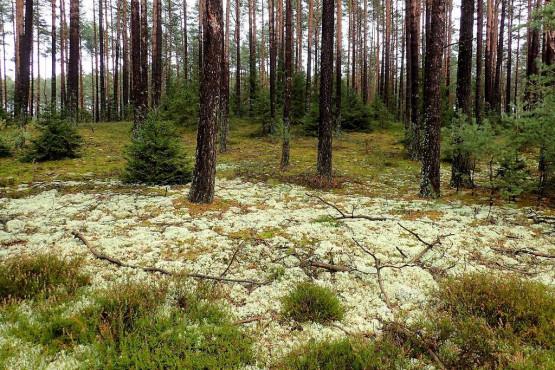 Bór Chrobotkowy, Wdzydzki Park Krajobrazowy i przepiękna gra kolorów, szczególnie, gdy wkoło przyroda dopiero co budzi się ze snu zimowego