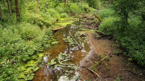 Zakamarki Białowieskiego Parku Narodowego towarzyszyć nam będą codziennie. Zobaczymy ostoje żubra i wilka, posłuchamy śpiewu ptaków i szemrania licznych potoków.