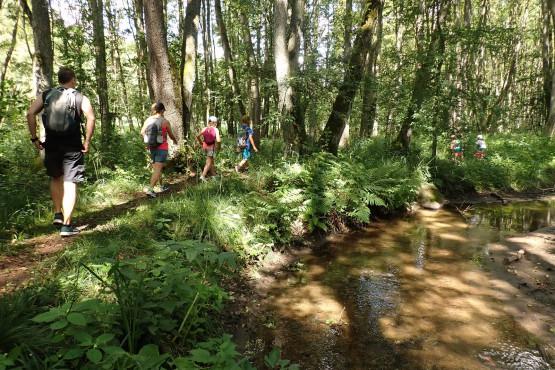 8 km trasa wędrówki przemierzy malownicze lasy pośród których meandruje potok Strzelenki