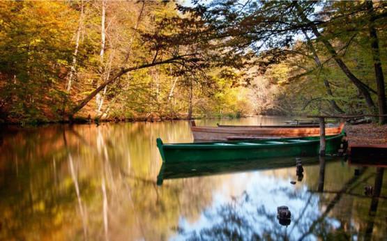Lasy Zaborskiego Parku Krajobrazowego przywitają nas malowniczymi, jesiennymi barwami, będzie więc czas na kontemplację otaczającej nas przyrody, aktywny wypoczynek, a także degustację wyśmienitych potraw z Borów Tucholskich