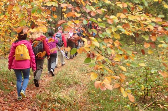 Sorella i GR3miasto z pewnością rozochocą twoje ciało oraz podniebienie. Świeże powietrze, malownicze lasy, jeziora lobeliowe, barwne torfowiska i smaczny posiłek na koniec wycieczki z dodadzą energii do dalszych działań. Z pewnością wrócisz z nami na szlak i to nie tylko jesienią.