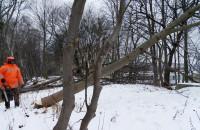 Pomorska Kolej Metropolitalna - wycinka drzew