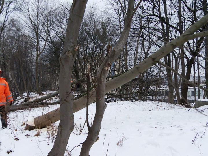 Wycinka drzew na trasie PKM.