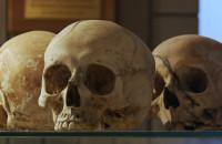 Zwiedź z nami Muzeum Kryminalistyki