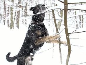 Pies Kacper w śniegu