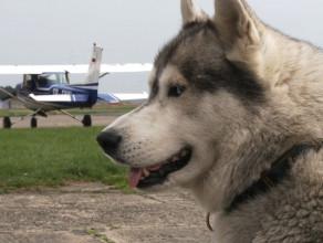 Latający pies w gdańskim aeroklubie