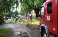 Strażacy usuwają zwalone drzewo