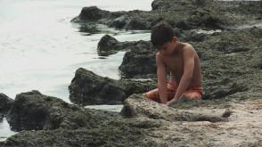 Walka z glonami na plaży