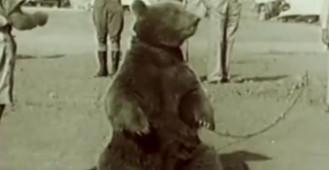Piwko dla niedźwiedzia