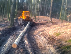 Wycinka drzew w Trójmiejskim Parku Krajobrazowym
