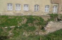 Koty w dziurze wstydu przy Bazylice Mariackiej