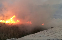 Pożar trzcin w Porcie Północnym