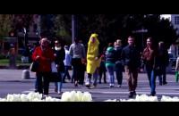 Podejrzane banany pojawiły się w Gdyni?