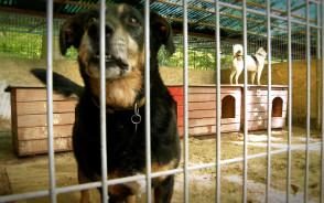 """Zakończenie budowy pawilonu dla psów w schronisku """"Ciapkowo"""""""