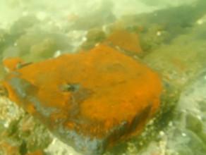 Działa na dnie Bałtyku pozostawione przez Niemców w 1945 roku