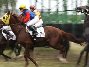 Wyścigi konne na Hipodromie