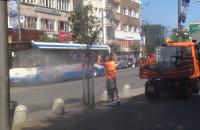 Mycie drzew na Świętojańskiej w Gdyni