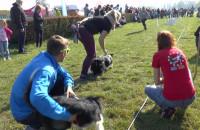 Flyball - psy biegały w sztafecie w Sopocie