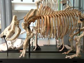 Ekspozycja szkieletów na UG