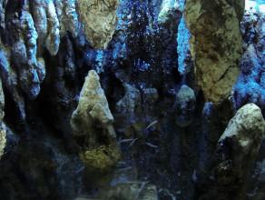 Jaskiniowe ryby bez oczu