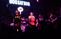 Dog Eat Dog - Who's The King?