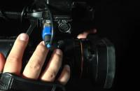 Żółw kontra szczotka