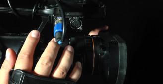 Młode foki w Bałtyku
