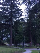 Jedno drzewko mniej w parku w Chwarznie