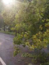 Korek na Wielkopolskiej - przewrócone drzewo