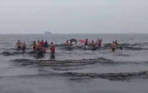 Wolontariusze Szlachetnej Paczki i Akademii Przyszłości wskoczyli do wody z morsami
