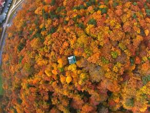 Jesień z lotu ptaka
