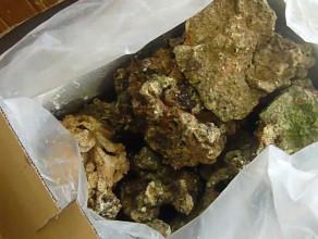 Udaremniony przemyt rafy koralowej