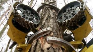 Niesamowite maszyny: mechaniczny drwal