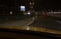 Dzik na Morskiej w Gdyni