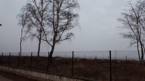 Wycinka na wydmach w Brzeźnie niepokoi mieszkańców