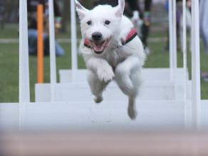Psia sztafeta w sopockim Parku Północnym