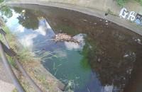 Zielona substancja wpadająca do kanału