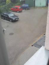 Leje jak scebra!