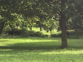 Wiewiórki gonią się po parku Kolibki