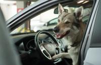 Galeria Bałtycka zachęca do przychodzenia z psem