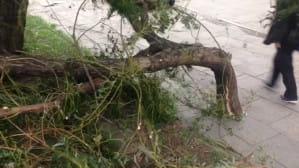 Wichura złamała konar drzewa na Dyrekcyjnej