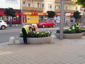 Kwietniki w Gdyni przygotowywane na jesień