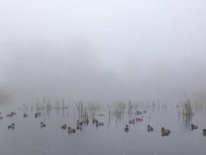Ujeścisko - zbiornik retencyjny we mgle