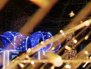 Bajkowa iluminacja fragmentu Parku Oliwskiego